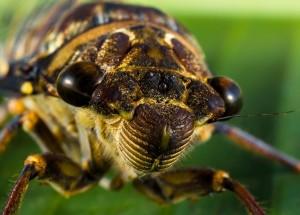 picaduras insectos