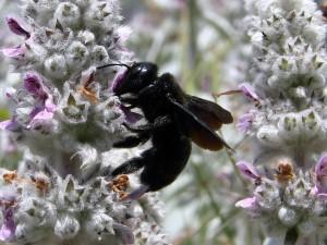 insectos que pican