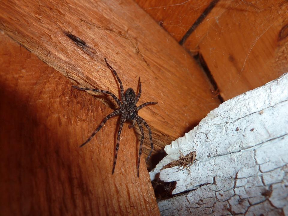 fobias arañas