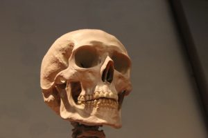 huesos craneo