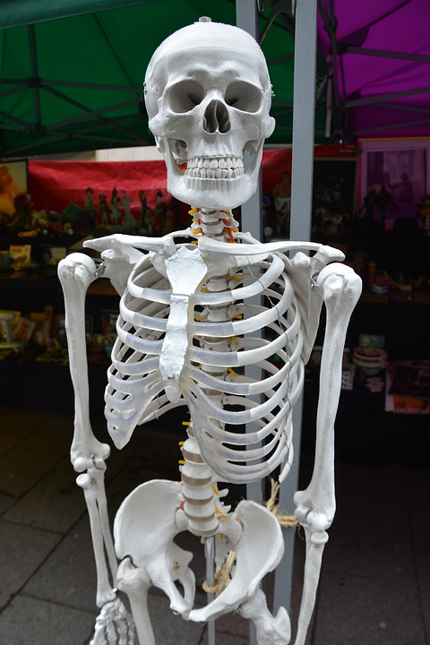 principales huesos esqueleto