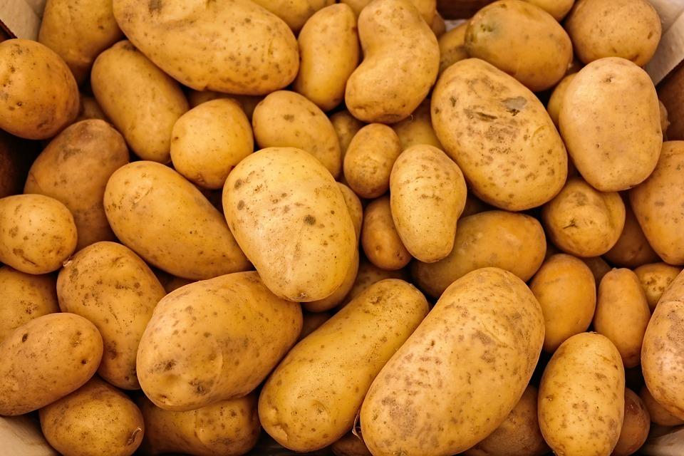patata astringente perros